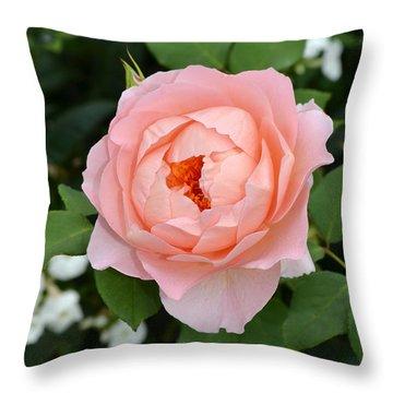 Pink Rose In Hamburg Planten Und Blomen Throw Pillow by Eva Kaufman