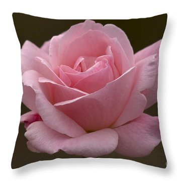 Throw Pillow featuring the photograph Pink Rose by Meg Rousher