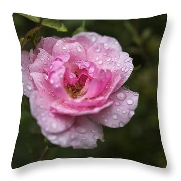 Pink Rose With Raindrops Throw Pillow