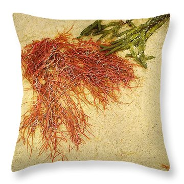 Pink Seaweed Red River Beach Harwich Cape Cod Ma Throw Pillow by Suzanne Powers