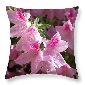 Pink Star Azaleas In Full Bloom Throw Pillow by Connie Fox