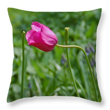 Pink Tulip Throw Pillow by Aimee L Maher Photography and Art Visit ALMGallerydotcom
