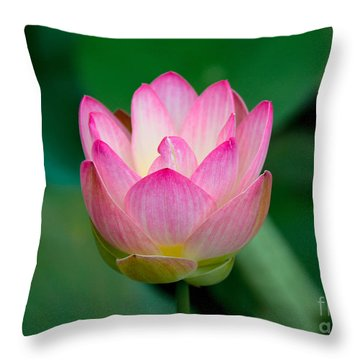 Pink Water Lily Throw Pillow by Lisa L Silva
