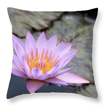 Pink Water Lily At Dusk Throw Pillow by Yvonne Wright
