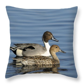 Pintail Duck Pair Throw Pillow
