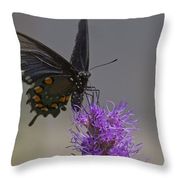 Pipevine Alights Throw Pillow
