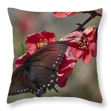 Pipevine Swallowtail And Roses Throw Pillow