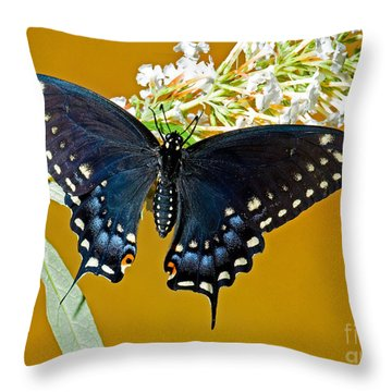 Pipevine Swallowtail Butterfly Throw Pillow by Millard H. Sharp