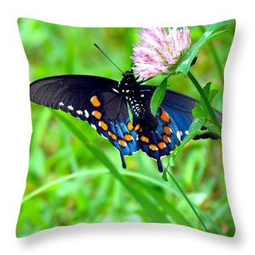 Pipevine Swallowtail Hanging On Throw Pillow