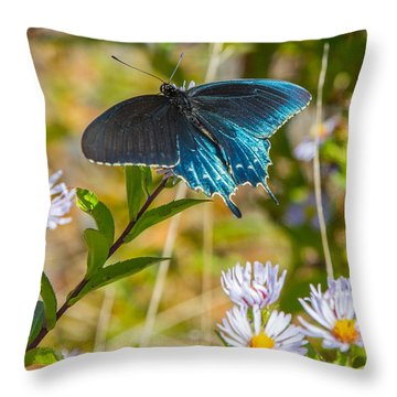 Pipevine Swallowtail On Asters Throw Pillow by John Haldane