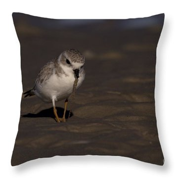 Piping Plover Photo Throw Pillow