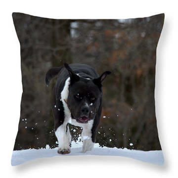 Throw Pillow featuring the photograph Pit At Play by Cathy Shiflett
