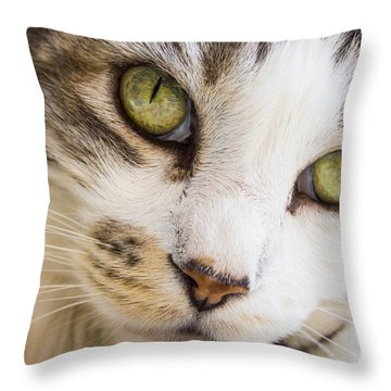 Throw Pillow featuring the photograph Pixie-bob 1 by Leigh Anne Meeks