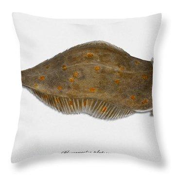Plaice Pleuronectes Platessa - Flat Fish Pleuronectiformes - Carrelet Plie - Solla - Punakampela Throw Pillow