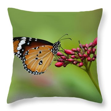 Plain Tiger Or African Monarch Butterfly Dthn0008 Throw Pillow