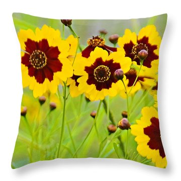 Plains Coreopsis Throw Pillow by Walter Herrit