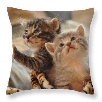 Playful Kittens Throw Pillow by Debby Pueschel