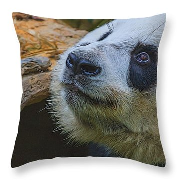 Pleading Panda Throw Pillow