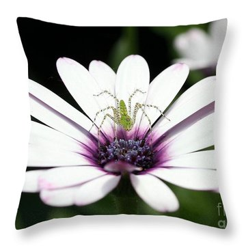 Please Don't Jump On Me Throw Pillow by Sabrina L Ryan