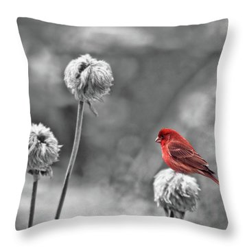 Please God I Need Spring Throw Pillow