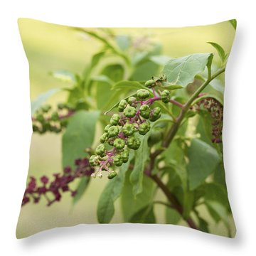 Throw Pillow featuring the photograph Pleasing To The Eye - Pokeweed Vine Art Print by Jane Eleanor Nicholas