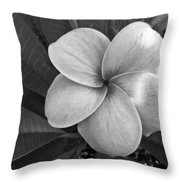 Throw Pillow featuring the photograph Plumeria With Raindrops by Shane Kelly