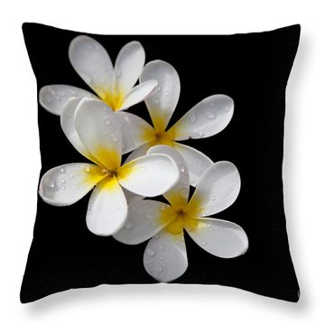 Plumerias Isolated On Black Background Throw Pillow by David Millenheft