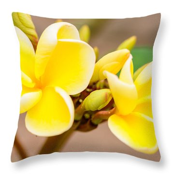 Plumerias Of Paradise 14 Throw Pillow