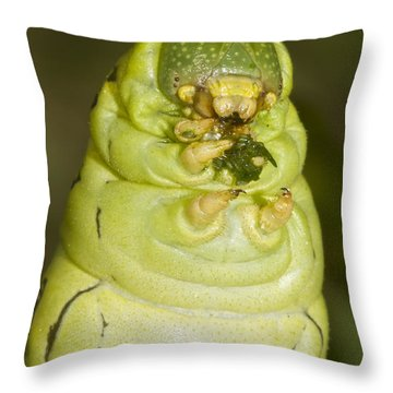 Plump Green Caterpillar Throw Pillow