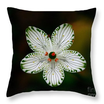 Throw Pillow featuring the photograph Pocosin Manifest by Paul Rebmann