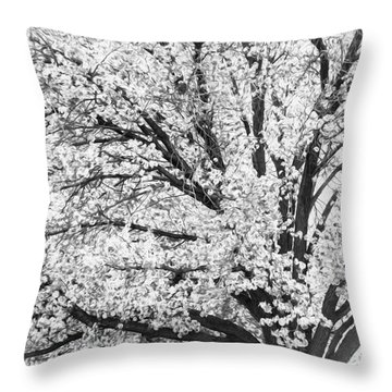 Throw Pillow featuring the photograph Poetry Tree by Roselynne Broussard
