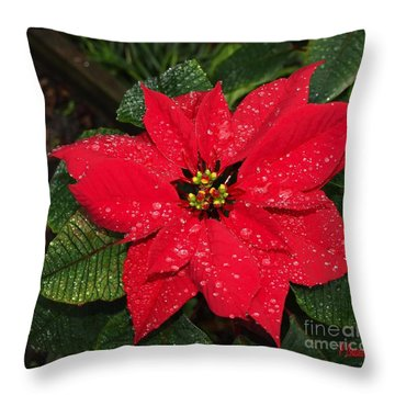 Poinsettia - Frozen In Time Throw Pillow