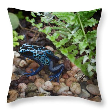 Poison Dart Frog Throw Pillow by Carol Ailles