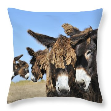 Throw Pillow featuring the photograph Poitou Donkey 3 by Arterra Picture Library