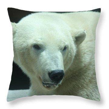 Polar Bear Head Shot Throw Pillow by John Telfer