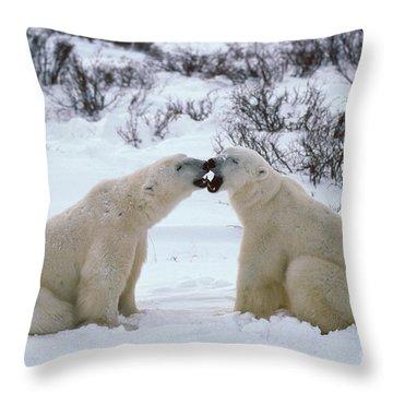 Polar Bears Sparring Throw Pillow by Francois Gohier