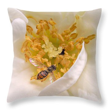 Pollination Of A Franklinia Tree Flower Throw Pillow by Constantine Gregory
