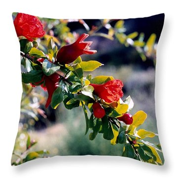 Throw Pillow featuring the photograph Pomegranate Forming by Kathy Bassett