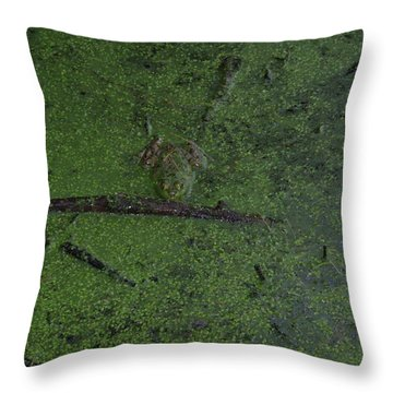 Throw Pillow featuring the photograph Pond Eyes by Robert Nickologianis