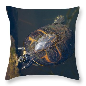 Pond Slider Turtle Throw Pillow by Rudy Umans