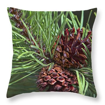 Ponderosa Pine Cones Throw Pillow by Sharon Talson