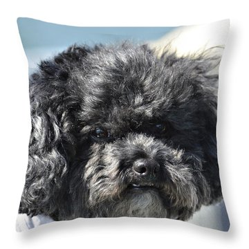 Poodle Throw Pillow by Susan Leggett