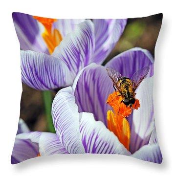 Popping Spring Crocus Throw Pillow by Debbie Oppermann