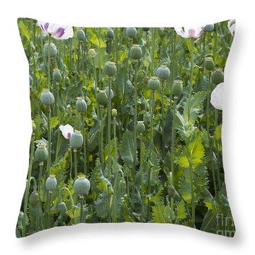 Poppy Field Throw Pillow by Michal Boubin
