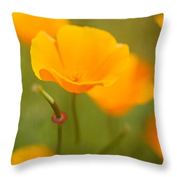 Throw Pillow featuring the photograph Poppy II by Ronda Kimbrow