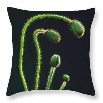 Poppy Buds Throw Pillow by Martin Konopacki