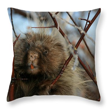 Porcupine And Berries Throw Pillow by Marty Fancy