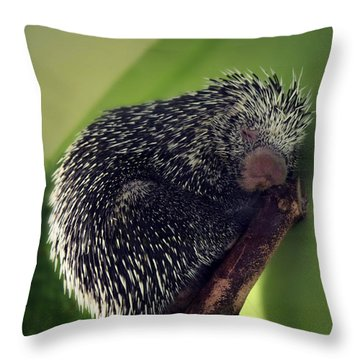 Porcupine Slumber Throw Pillow by Melanie Lankford Photography