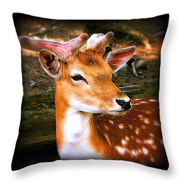 Portrait Male Fallow Deer Throw Pillow