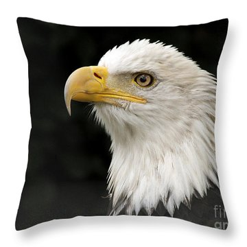 Throw Pillow featuring the photograph Portrait Of A Bald Eagle by Inge Riis McDonald